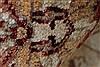 Pishavar Beige Hand Knotted 51 X 60  Area Rug 250-27369 Thumb 1