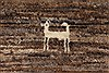 Gabbeh Beige Hand Knotted 36 X 51  Area Rug 250-27668 Thumb 9