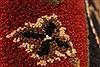 Jaipur Black Hand Knotted 20 X 30  Area Rug 250-28342 Thumb 6