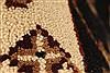 Jaipur Black Hand Knotted 20 X 30  Area Rug 250-28364 Thumb 5