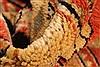 Serapi Orange Hand Knotted 120 X 1410  Area Rug 250-28434 Thumb 8