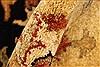 Pishavar Beige Hand Knotted 120 X 1411  Area Rug 250-28508 Thumb 9