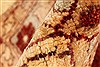 Pishavar Beige Hand Knotted 127 X 1510  Area Rug 250-28814 Thumb 8